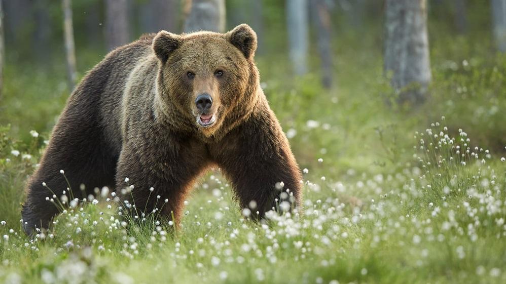 Τι κάνουμε αν συναντήσουμε αρκούδα